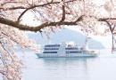 海津大崎桜並木を湖上から 奥琵琶湖クルーズ〈予約制〉