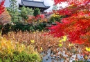 プロの写真家と巡る 京都名所フォト・レッスン2