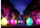 ~世界遺産の森に広がる神秘的な光の空間~  下鴨神社 糺の森の光の祭 Art by teamLab