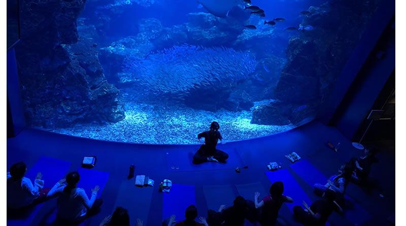KPCヨガトレ VOl.1  グッドモーニングヨガ 京都水族館